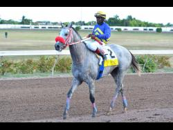 File Race Car ridden by Dane Nelson returns to the winners circle after he wins a race at Caymanas Park earlier this year.