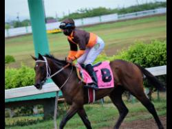 Eroy ridden by Omar Walker  trods after winning the seventh race at Caymanas Park in Portmore, St Catherine, on Saturday, August 15, 2020.