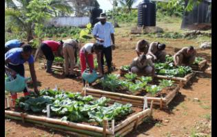 Aeon Stewart and his students tend to crops in a section of the school garden at Perth Town Academy.