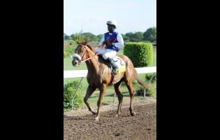 Run Thatcher Run, ridden by Omar Walker.