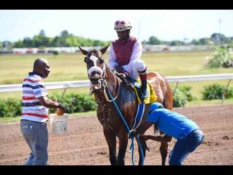 FILE Patriarch, ridden by Dane Nelson, is cooled down by his handlers after cantering to an easy victory in the second race at Caymanas Park on Saturday, January 4, 2020.